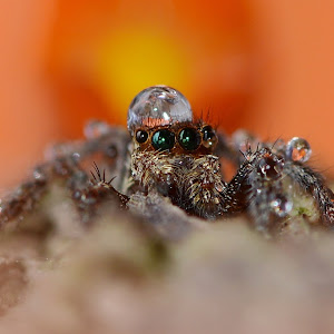 Spiders shower 053-001.JPG