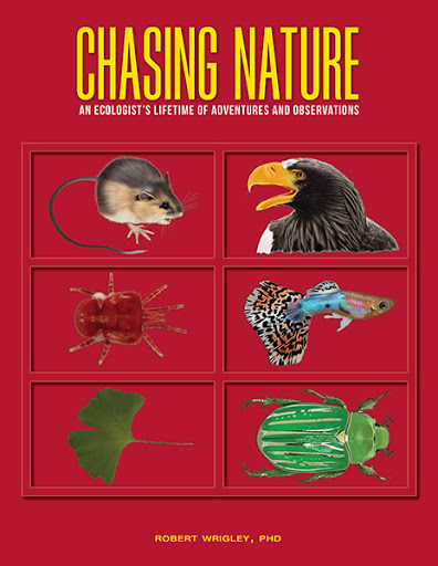 Chasing Nature cover