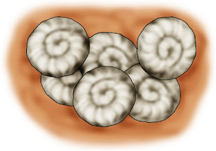 Photo: Entwicklung der Schnecke - Eier