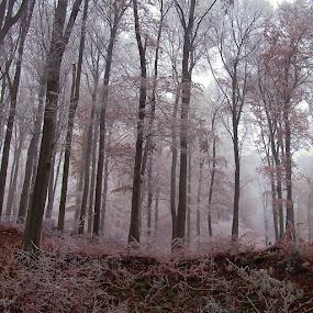Fog and Light by Jadranka Bužimkić - Landscapes Forests