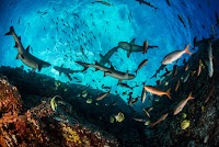 Sharks, fish, and other reef sea animals are seen from below, bright blue sky above.