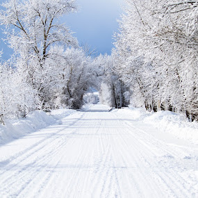 Snowy Road by Chad Roberts - Landscapes Prairies, Meadows & Fields ( winter, cold, snow, road, storm,  )