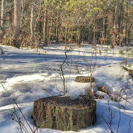 Unburied by Patti Pappas - Nature Up Close Trees & Bushes