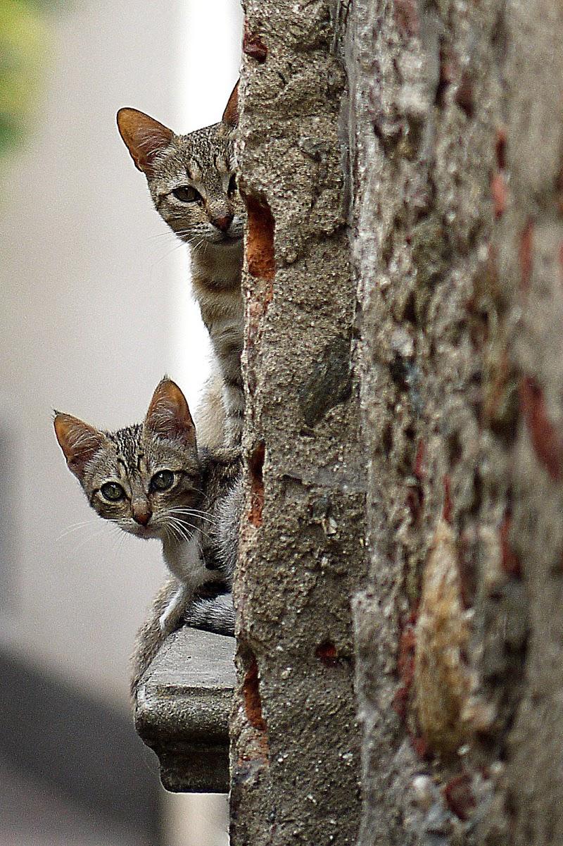 Curiosità o timore?... di Giuseppe Loviglio