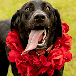 Roses are red by Myra Brizendine Wilson - Animals - Dogs Portraits ( pets, animal shelter, rescue dog, canine, dog )