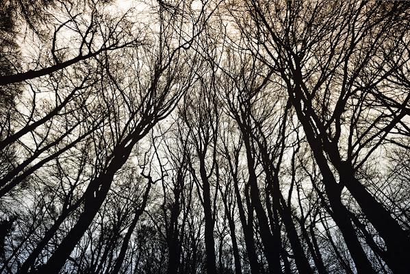 Trees... di nicolanigri