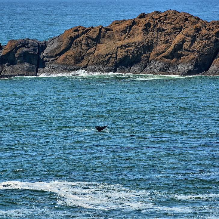 Depoe Bay Whale Watching + A Guide to When and Where to See Whales in the US.
