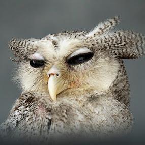 by Kanda Ridho - Animals Birds