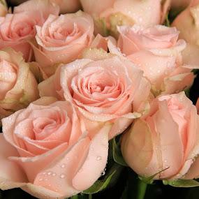 by Philips Onggowidjaja - Flowers Flower Arangements