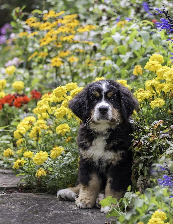 Binx by Sue Matsunaga - Animals - Dogs Puppies