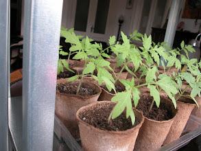 Photo: Güzel ve hızlı büyüyorlar...