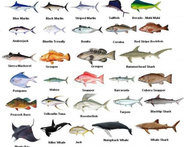 Sea fishes – Vinnoria Trading Corporation, Company | all.biz