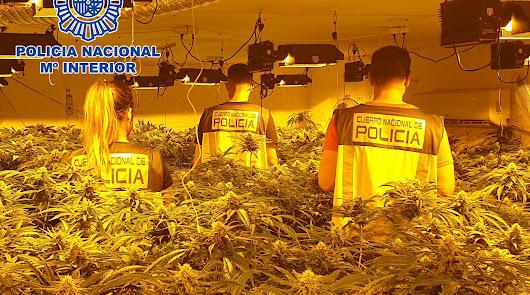 Marihuana, hachís, cocaína o speed: las cifras de la droga en Almería