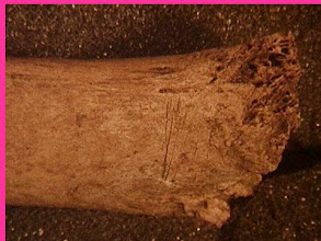 Photo: Cut marks, probably from dismembering/processing.  Human?