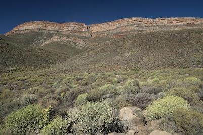 Fynbos und Sandsteinfelsen in den Cederbergen