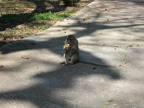 Photo: Hungry monkey