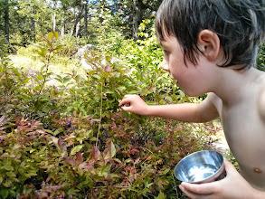 Photo: Clark Picks Wild Blueberries