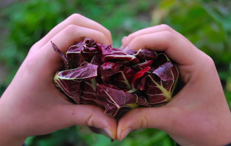 Dall'orto di casa. Km ZERO, pesticidi ZERO, 100% passione, 100% bontà. di rosy_greggio