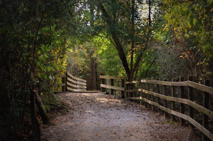 A walk through the state park by Rhonda Kay - Nature Up Close Trees & Bushes