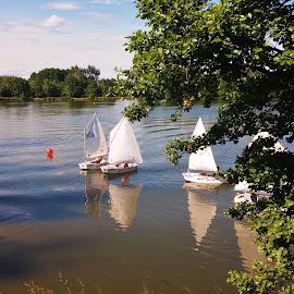 REGATTA by Wojtylak Maria - Sports & Fitness Watersports ( water, watersports, sailing, boats, lake, regatta,  )