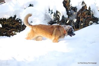 Photo: Velda - 12.2.2012