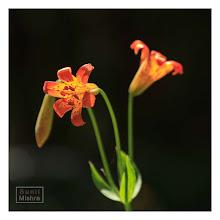 Photo: Eastern Sierras-20120717-781