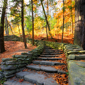 Stairway to by Cal Brown - Landscapes Travel ( letchworth, fall leaves, stairs, fall colors, state park,  )