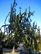 Photo: Sky with a huge cactus tree in Babloa Park