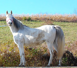 "Photo: What an incredible gift she was - my newest horse, ""Icy"""