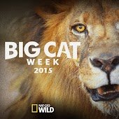 Big Cat Week
