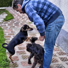 by Branka Radmanić - Animals - Dogs Playing
