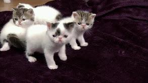 Curious Kittens thumbnail