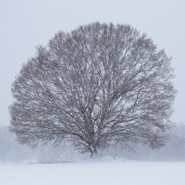 Winter by Allan Wallberg - Nature Up Close Trees & Bushes (  )