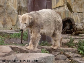 Photo: Knut hat es wieder :-)