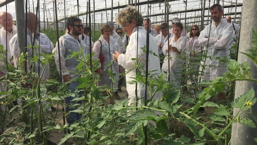 Visita de los investigadores europeos a la finca de Clisol Agro