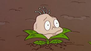 Planting Dil; The Joke's on You thumbnail