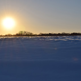 Snowy Field by John Tuttle - Landscapes Travel ( corn stalks, field, snow, cloud, trees, lens flare, rural, sun, country,  )