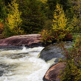 Fall Colors by Waterfall by Dave Lipchen - Nature Up Close Rock & Stone ( fall colors by waterfall )