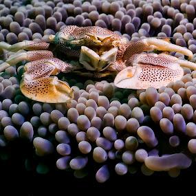 Porcelain by Richard ten Brinke - Animals Sea Creatures ( sea creatures, underwater life, ocean life,  )