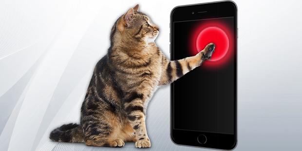 Laser for cat Screenshot