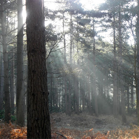 Early morning Forest by Cliff Oakley - Nature Up Close Trees & Bushes
