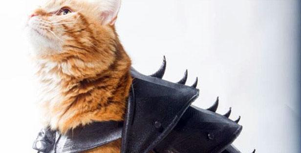 Бонус: кошачьи доспехи