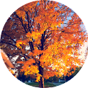 Indiana Trees icon