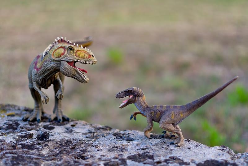 prehistoric struggle di Luporosso