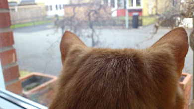 Photo: Sven looking out the kitchen window.