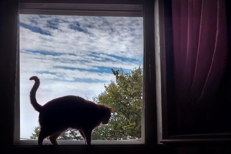 Finestra con gatto di Cho