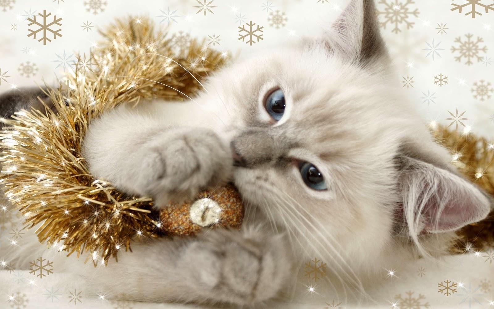 Сибирский котенок фото, Сибирский котенок фото новогодние картинки обои  рабочий стол, Сибирский котенок фото обои новогодние картинки, фото  фотографии с Новым годом картинка кошки изображение