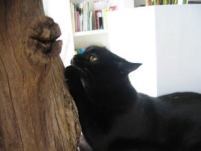 Photo: und es gibt keine bessere Pfoticure (Katzenzimmer)