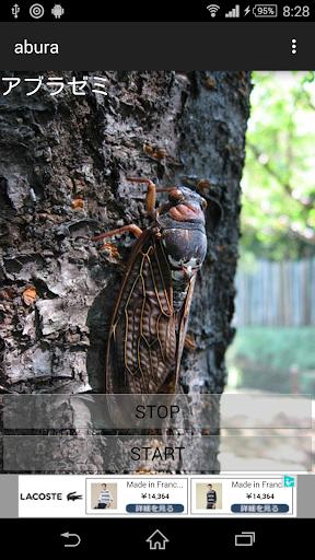 虫の鳴き声アプラゼミ