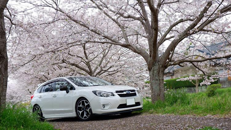 インプレッサ スポーツ GP6の桜と愛車,桜とコラボ,桜とスバル,桜に関するカスタム&メンテナンスの投稿画像3枚目